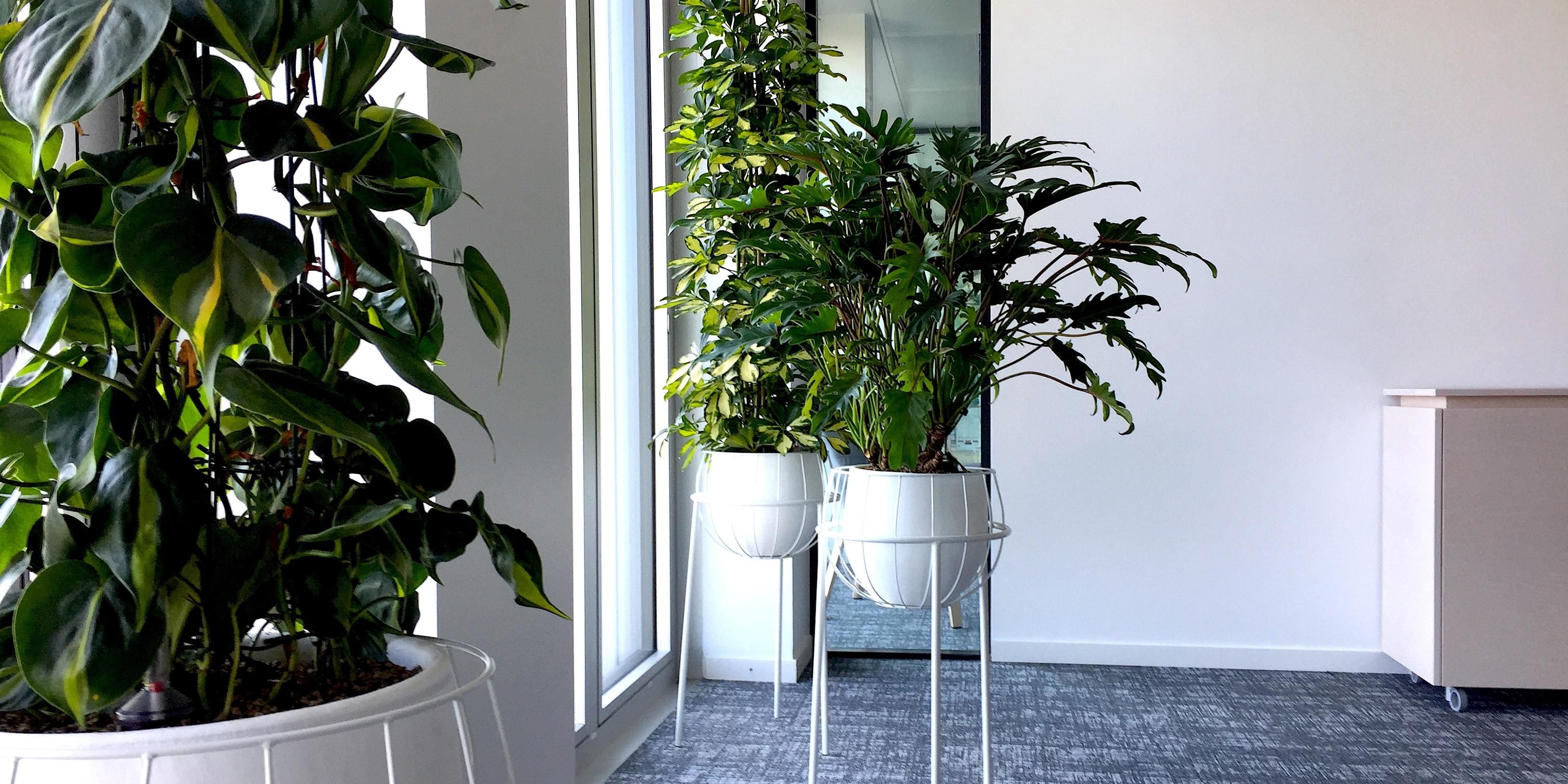 Ensemble de pots Serax et plantes tropicales